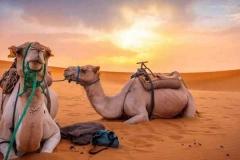 camel-trek_morocco-sahara-Merzouga